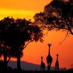 Что нужно знать перед путешествием в Африку